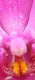 Orchidée et waterdrop Photos stock