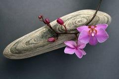 Orchidée-pierre Images libres de droits