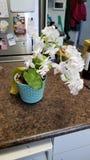 Orchidea 2 immagini stock