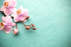 Orchidea obraz royalty free