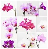 Orchidea fotografia stock