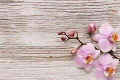 Orchidea. obraz royalty free