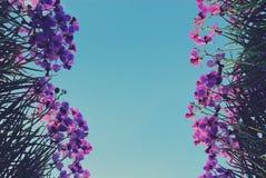 Orchidea Zdjęcie Royalty Free
