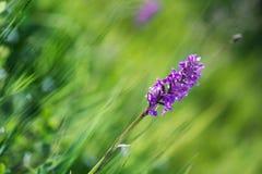 Orchidea Obraz Stock