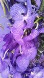Orchidea Lizenzfreie Stockfotos