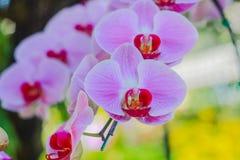 Orchidea Zdjęcia Royalty Free