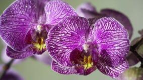 Orchidea zdjęcie wideo