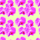Orchidea Bezszwowa deseniowa tekstura kwiaty tło kwiecisty Zdjęcia Stock
