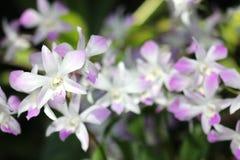 Orchidea bianca in foresta Fotografie Stock Libere da Diritti