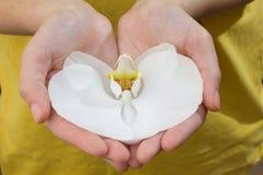 Orchidea bianca in mani Fotografia Stock