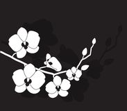 Orchidea bianca stilizzata Fotografia Stock Libera da Diritti