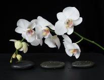 Orchidea bianca su una priorità bassa nera Fotografie Stock