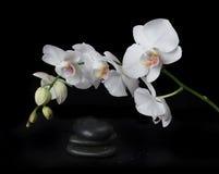 Orchidea bianca su una priorità bassa nera Immagini Stock Libere da Diritti