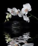 Orchidea bianca su una priorità bassa nera Immagine Stock Libera da Diritti