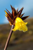 Orchidea che cresce in La Gran Sabana, Venezuela Fotografia Stock Libera da Diritti