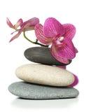 Orchidea che pone sulle pietre Fotografie Stock Libere da Diritti