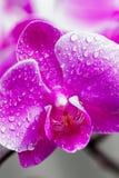 Orchidea closeup Arkivbilder