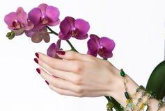 Orchidea commovente Manicured della mano fotografia stock