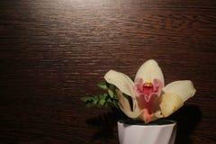 Orchidea con fondo nero Fotografia Stock Libera da Diritti