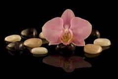 Orchidea con il cristallo Immagini Stock Libere da Diritti