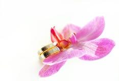 Orchidea con le fedi nuziali Immagine Stock