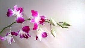 orchidea del mazzo Fotografie Stock