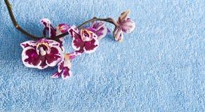 Orchideadell'inchiostro di Ð su fondo blu Fotografie Stock Libere da Diritti