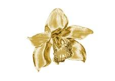 Orchidea dell'oro illustrazione di stock