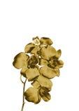 Orchidea dell'oro illustrazione vettoriale