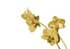 Orchidea dell'oro royalty illustrazione gratis