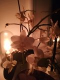 Orchidea della giungla immagini stock libere da diritti