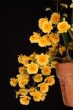 Orchidea: Dendrobium giallo Fotografia Stock