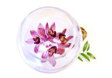Orchidea dentellare Fotografia Stock Libera da Diritti