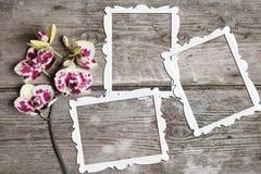 Orchidea dentellare con i blocchi per grafici Immagini Stock