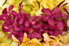 Orchidea di bellezza Immagini Stock Libere da Diritti