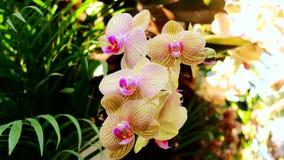 Orchidea di colore nel giardino video d archivio