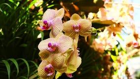 Orchidea di colore nel giardino stock footage
