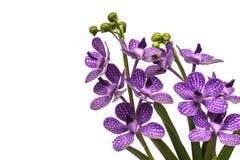 Orchidea di plastica Fotografie Stock Libere da Diritti
