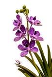 Orchidea di plastica Fotografia Stock Libera da Diritti