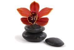 Orchidea e ciottoli fotografia stock libera da diritti