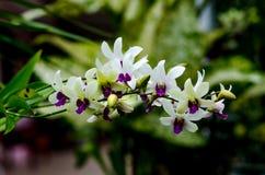 Orchidea e fiori Fotografia Stock Libera da Diritti
