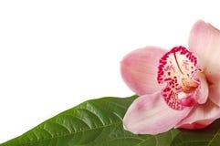 Orchidea e fogli della stazione termale Fotografia Stock