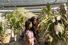 Orchidea fesival Fotografia Stock