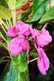 Orchidea flower stock images