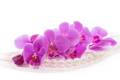 Orchidea Gałąź różowe orchidee i perły obraz stock