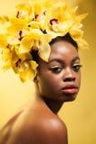 Orchidea gialla Immagini Stock Libere da Diritti