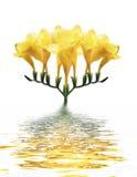 Orchidea gialla in acqua Fotografia Stock