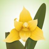 Orchidea gialla nel fondo verde, illustrazione di vettore Fotografia Stock
