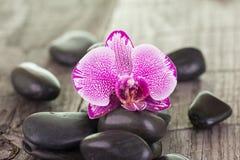 Orchidea i czerń kamieni zamknięty up Obrazy Royalty Free