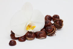 Orchidea i kasztany Zdjęcia Stock